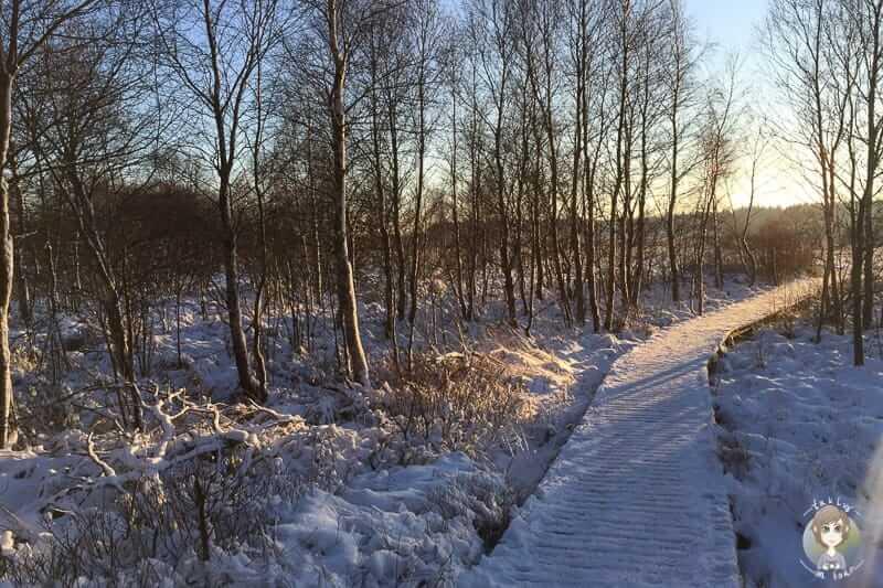 Mont Rigi Wanderung im Schnee