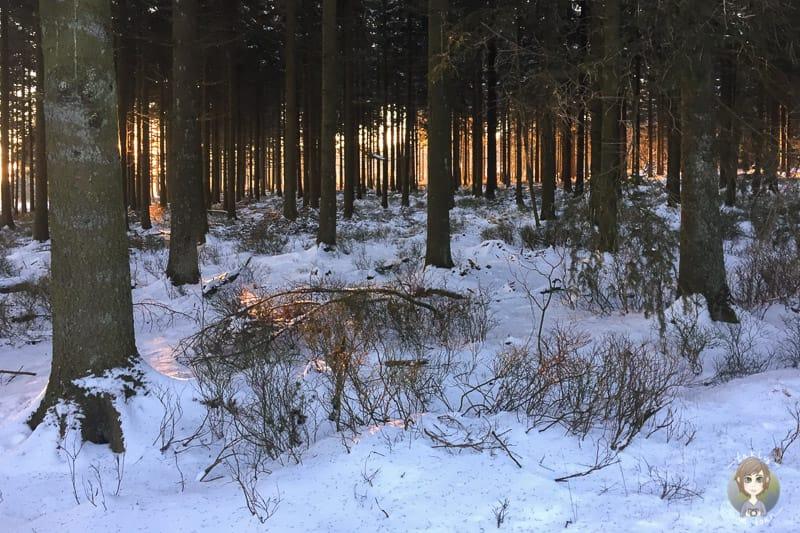 Sonnenstrahlen im Wald am Mont Rigi im Schnee