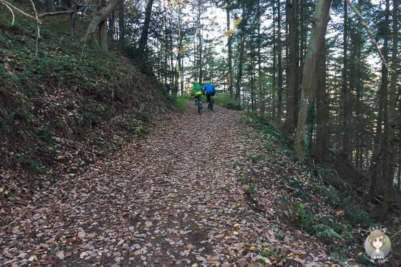 Waldweg der Buntsandsteinrunde in Nideggen wandern