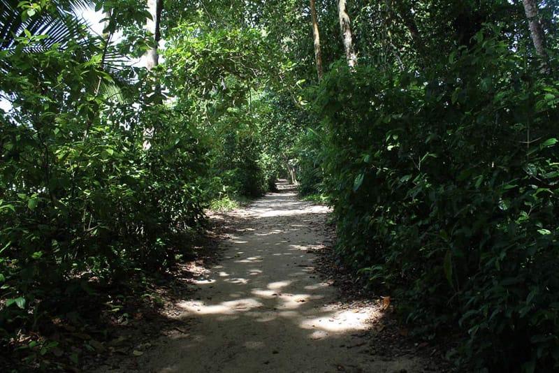 Wanderung Nationalpark Cahuita Glamping Costa Rica gindeslebens