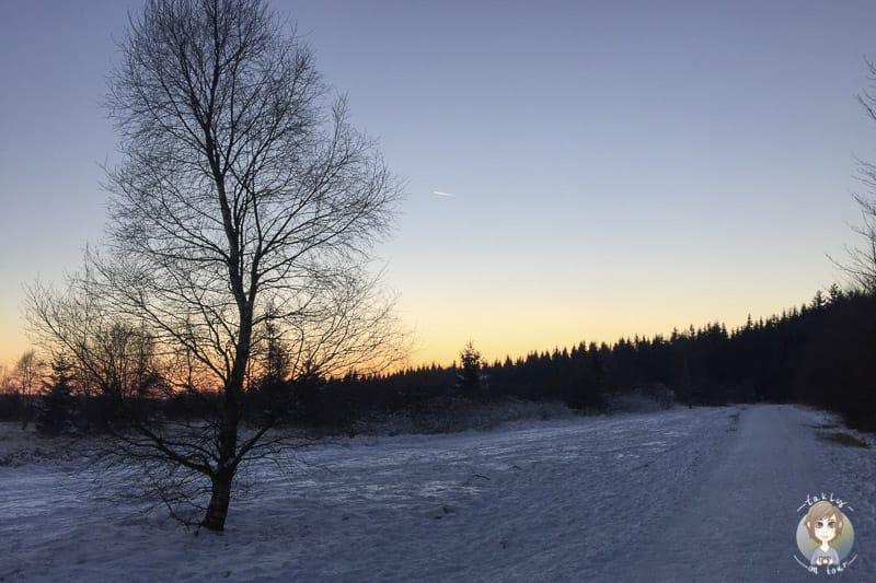 Sonnenuntergangsstimmung im Polleur Venn am Mont Rigi