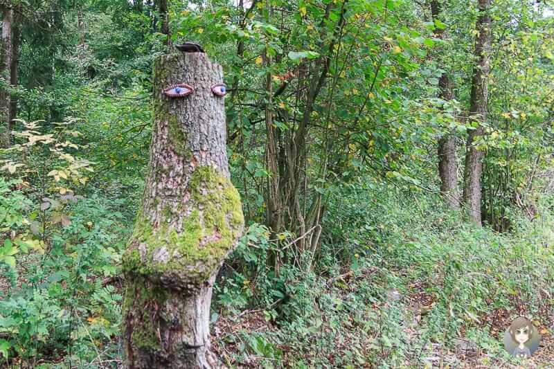 Augen am Listersee im Sauerland