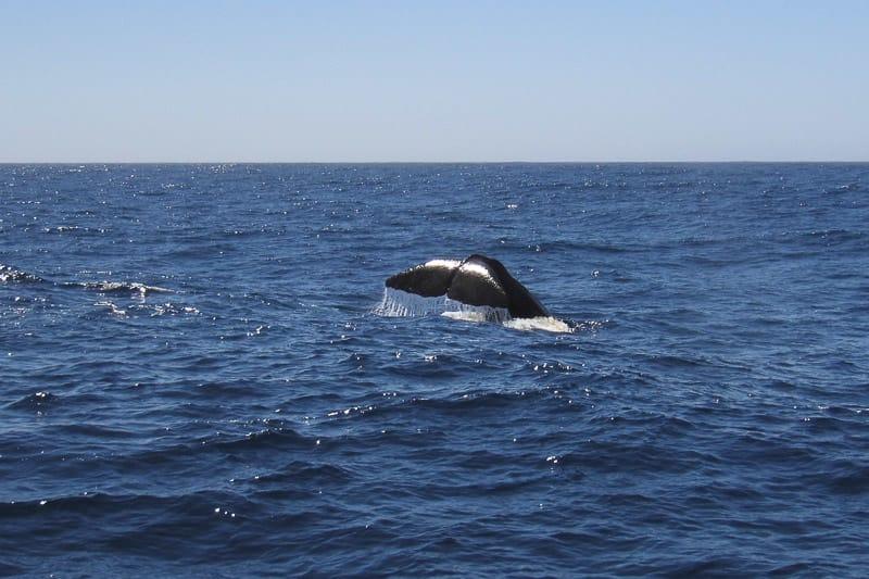 Wale in Kaikoura Neuseeland in 3 Wochen