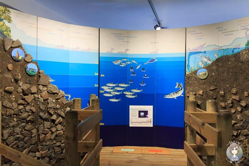LIZ Möhnesee Ausstellung