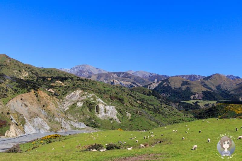 Tipps und Erfahrungen zu Neuseeland Reisen