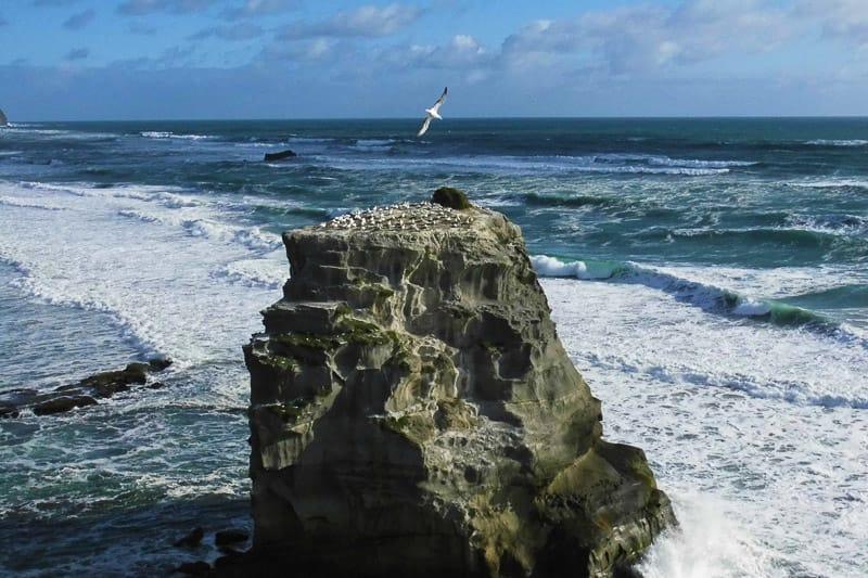 Neuseeland Roadtrip 3-4 Wochen