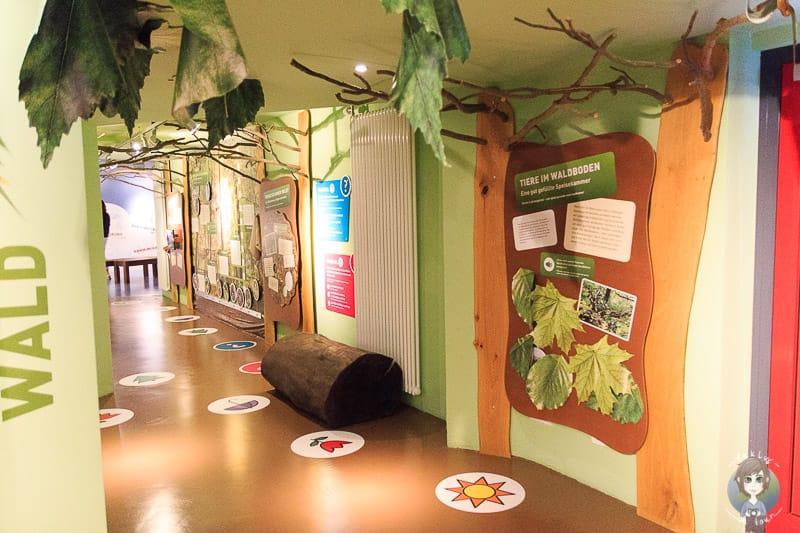 Visionarium Diemelsee Ausstellung