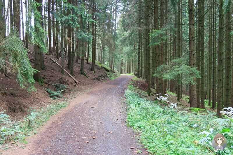 Waldweg der KuLTour Wanderung im Sauerland
