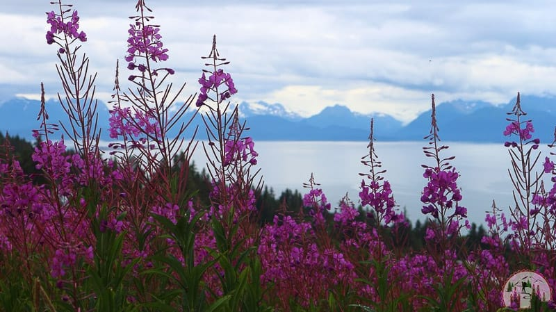 Der Overlook Point bei Homer in Kenai Alaska