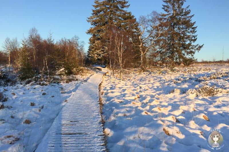 Polleur Venn Wanderung im Schnee