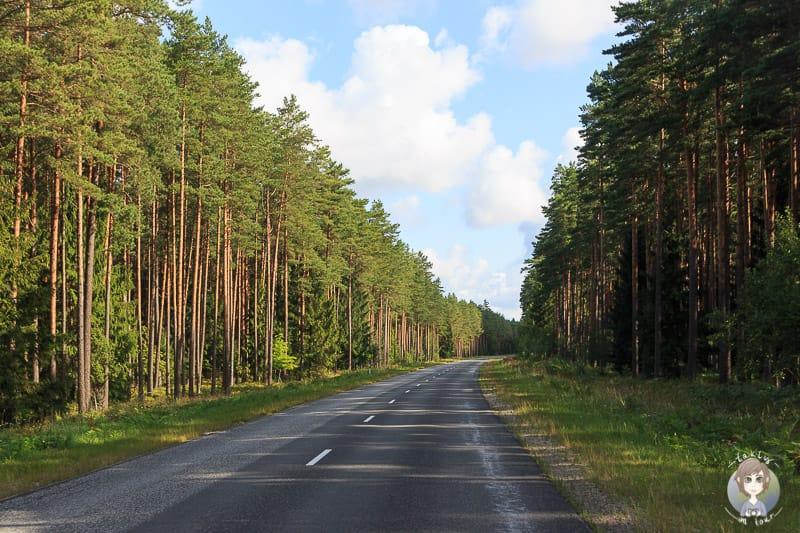 Auf einer Reise mit dem Wohnmobil durchs Baltikum