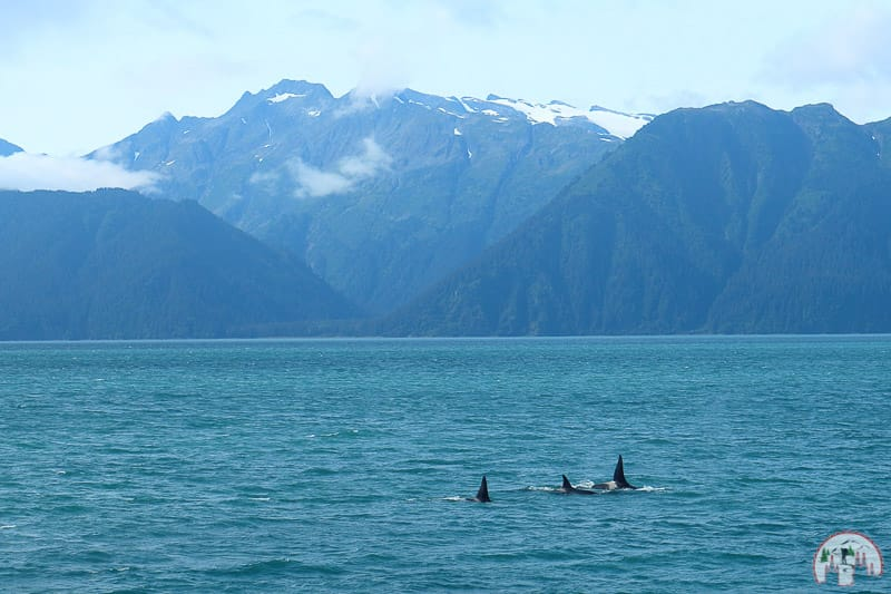 Der Kenai Fjords Nationalpark bei Seward in Alaska