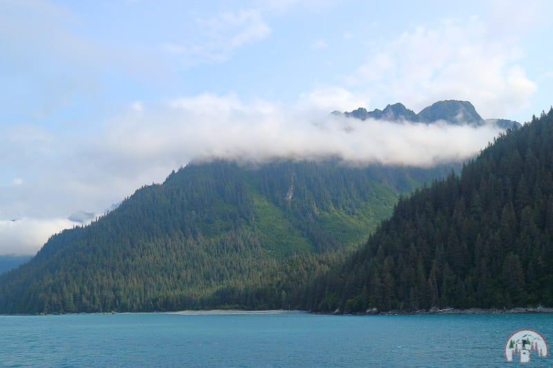 Sitka Fichten am Golf von Alaska bei Seward