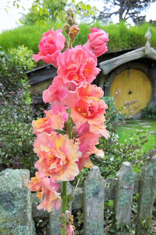 Blumen in Hobbiton in Neuseeland