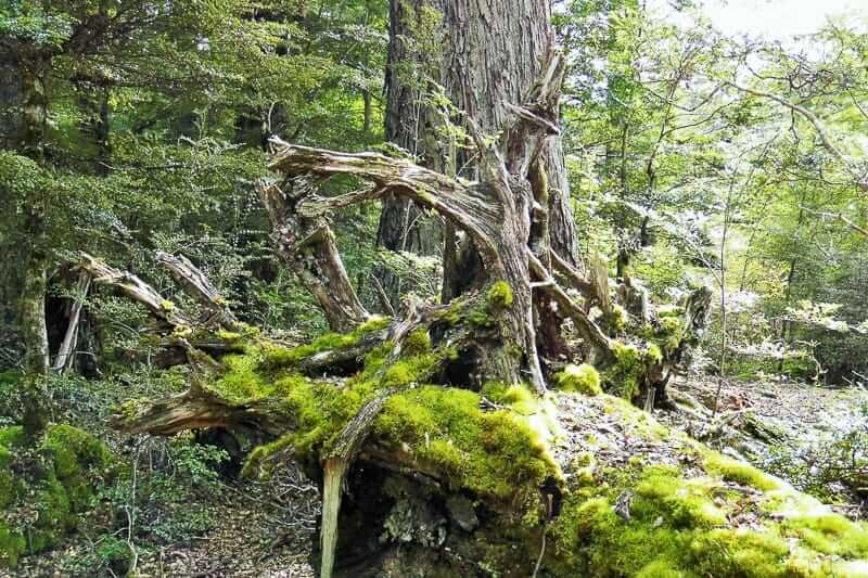 Herr der Ringe Drehorte des Zauberer im Fangorn Wald
