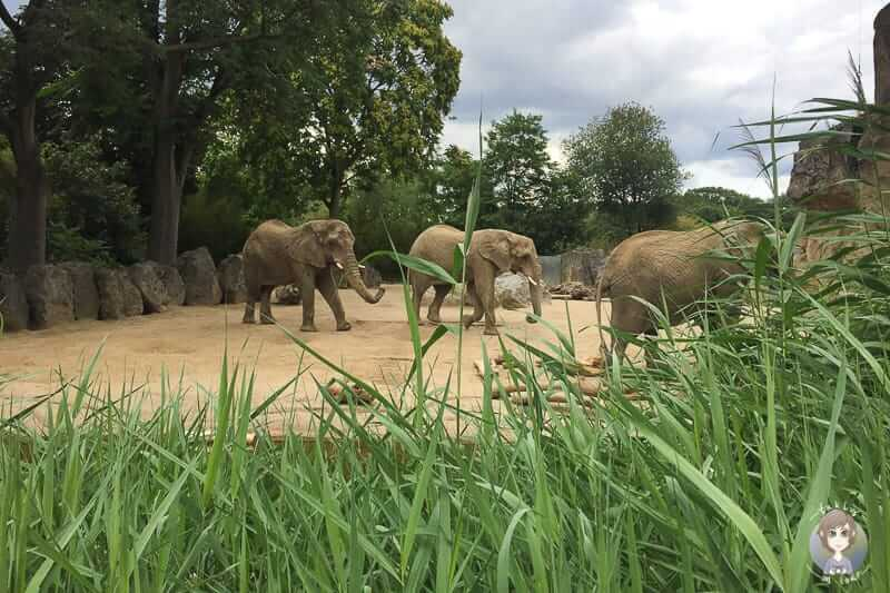 Rheinlandcard Ausflugsziele Zoo