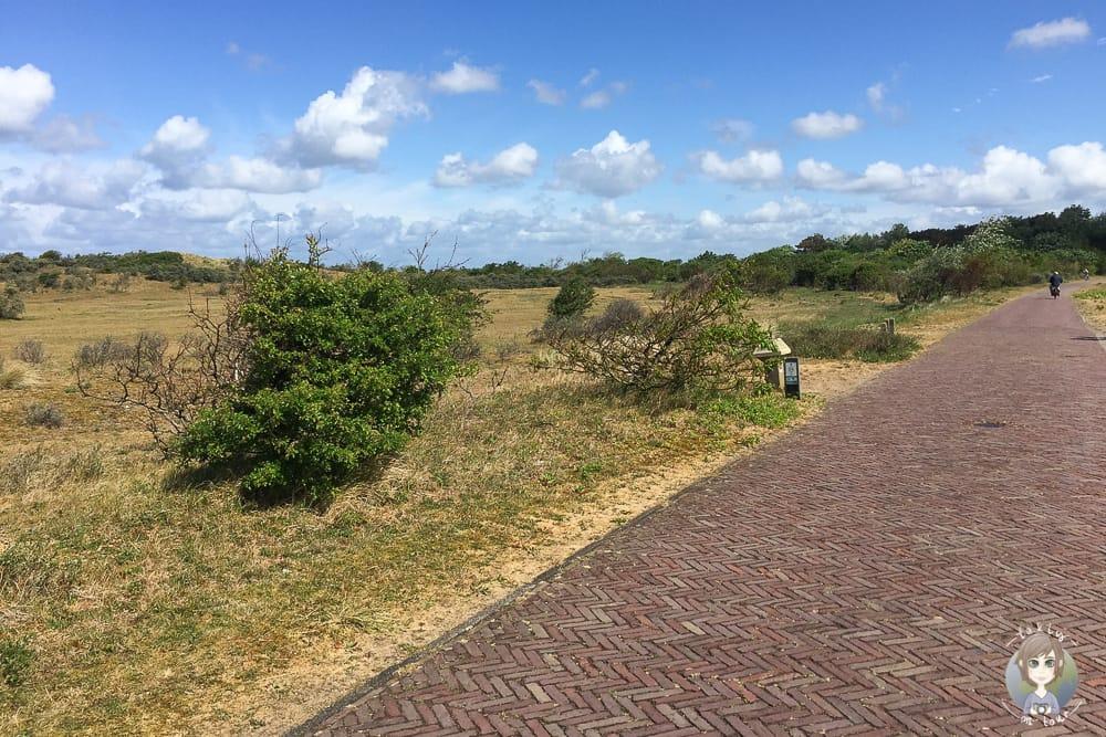 Urlaub in Nordholland am Nordholländischen Dünenreservat