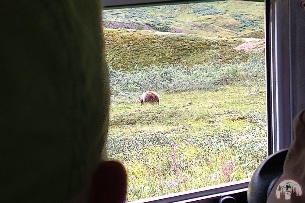 Mit einem Bus durch den Denali Nationalpark