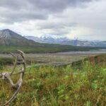 Atemberaubender Denali Nationalpark: Alaskas Weite & Tierwelt erleben