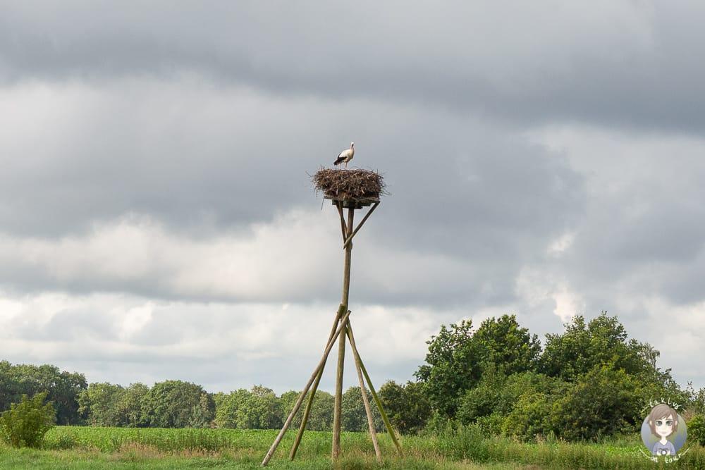 Ein Storch in Drenthe beim Urlaub in Holland